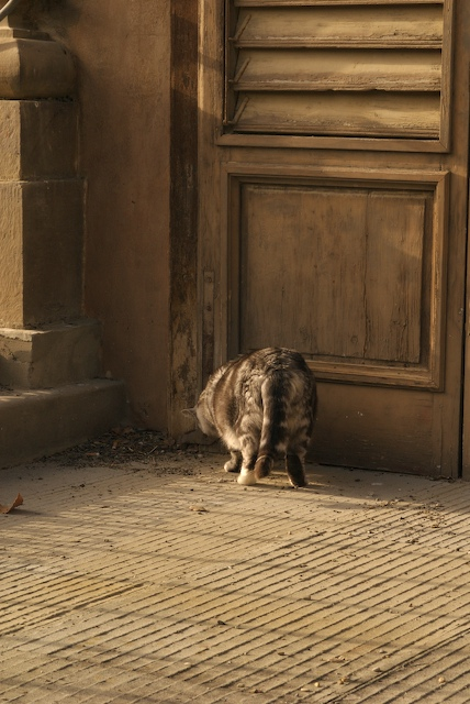 Cats of Bobobli, No. 5